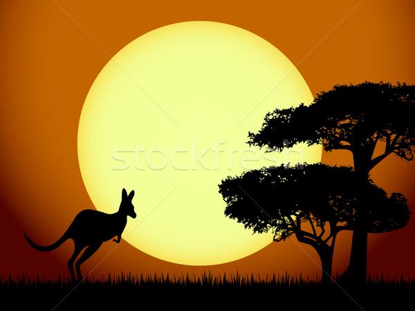 Kangaroo at sunset Stock photo © PiXXart