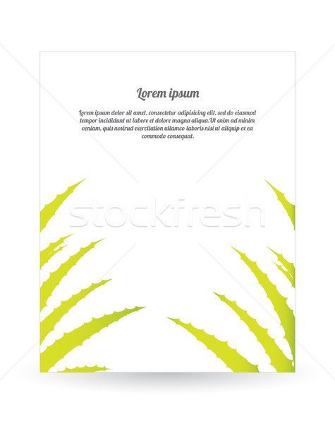 special flyer with aloe vera design Stock photo © place4design