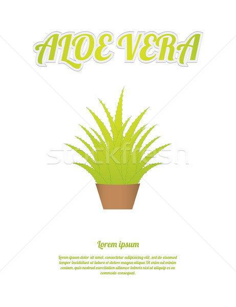 Aloe médicos hoja salud fondo verde Foto stock © place4design