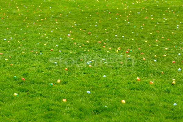 イースターエッグハント 春 草原 イースターエッグ 隠された 草 ストックフォト © pngstudio