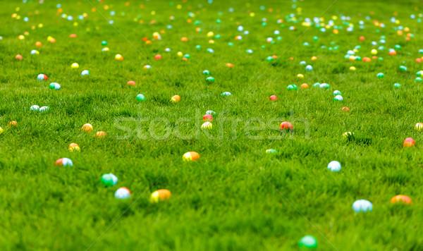 Easter egg hunt bahar çayır paskalya yumurtası gizlenmiş çim Stok fotoğraf © pngstudio