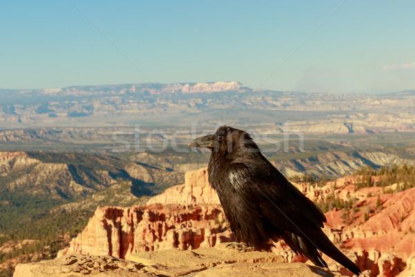 Kuzgun kanyon taş duvar çöl ölüm siyah Stok fotoğraf © pngstudio