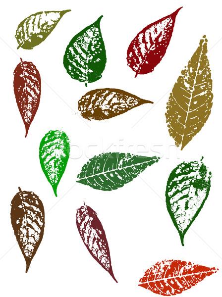 Grunge elements - Autumn Leaves 4 Stock photo © PokerMan