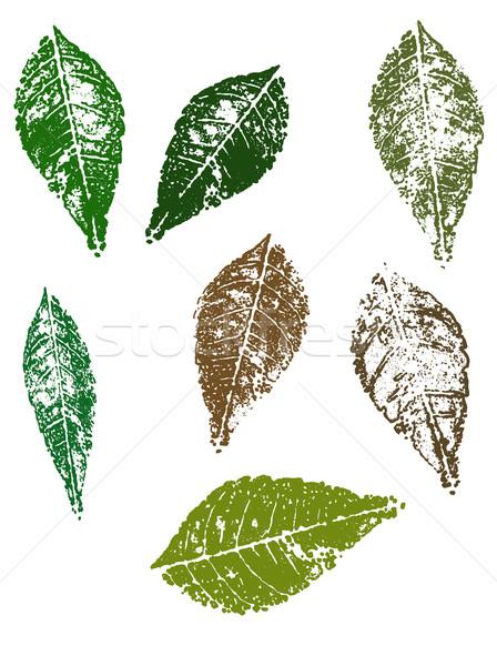 Grunge elements - Autumn Leaves Stock photo © PokerMan