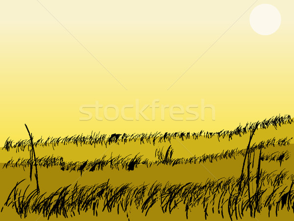 желтый пейзаж сцена трава полях небе Сток-фото © PokerMan