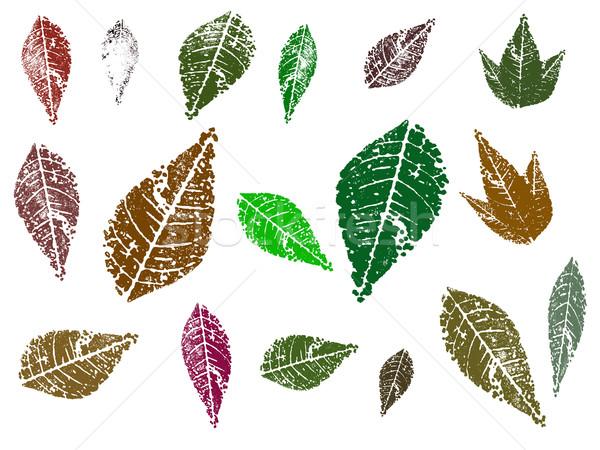 Leaves 4 Stock photo © PokerMan