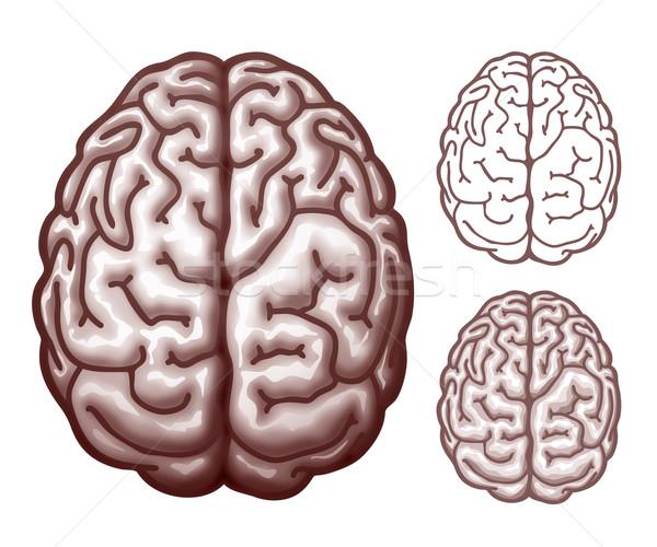 мозг Top мнение eps10 прозрачность Сток-фото © polygraphus