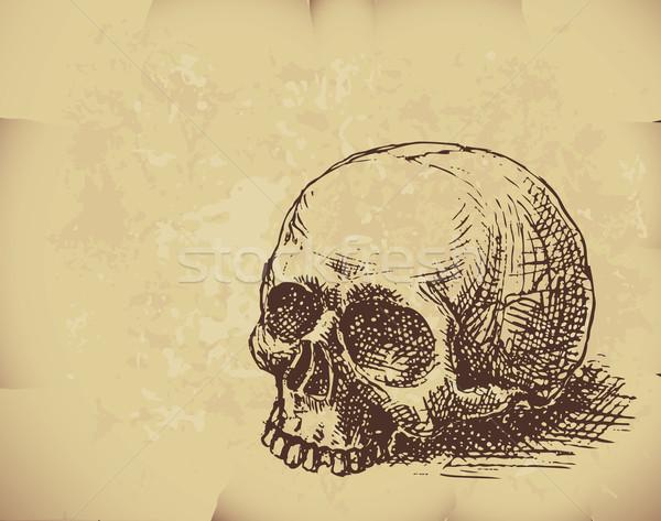 Dibujado a mano cráneo papel viejo eps8 organizado capas Foto stock © polygraphus