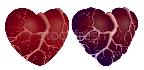 Iki kalp sağlıklı kalpler eps8 Stok fotoğraf © polygraphus