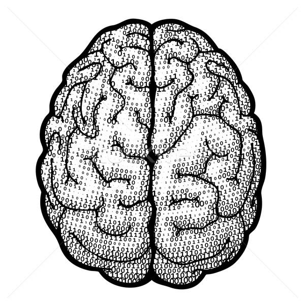 Dijital beyin üst görmek ikili eps8 Stok fotoğraf © polygraphus