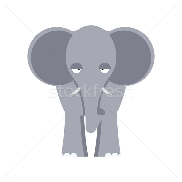 Elephant front view isolated. Big wild African beast on white ba Stock photo © popaukropa