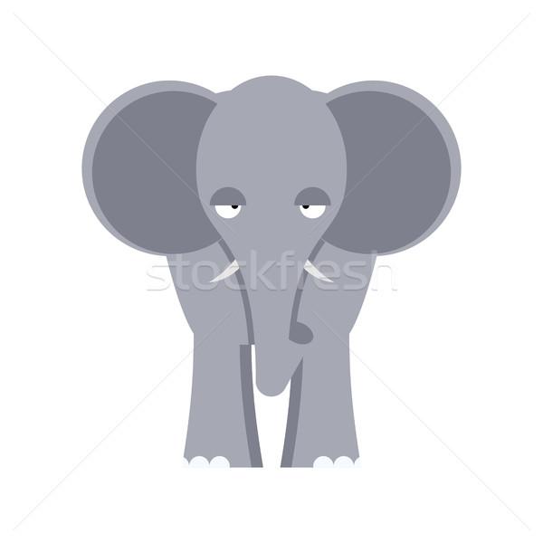 Słoń front widoku odizolowany duży Zdjęcia stock © popaukropa