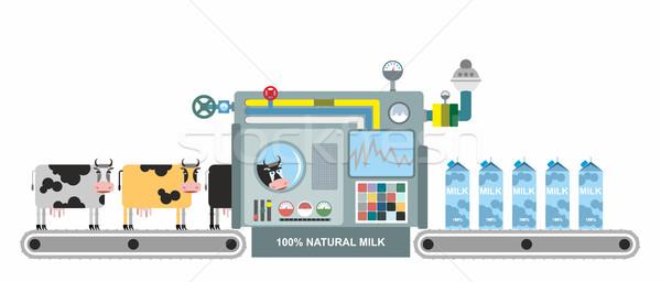 Infographics süt üretim inekler kemer doğal Stok fotoğraf © popaukropa