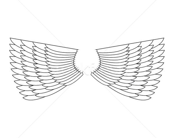 Angyalszárnyak izolált fehér toll szárny madár Stock fotó © popaukropa
