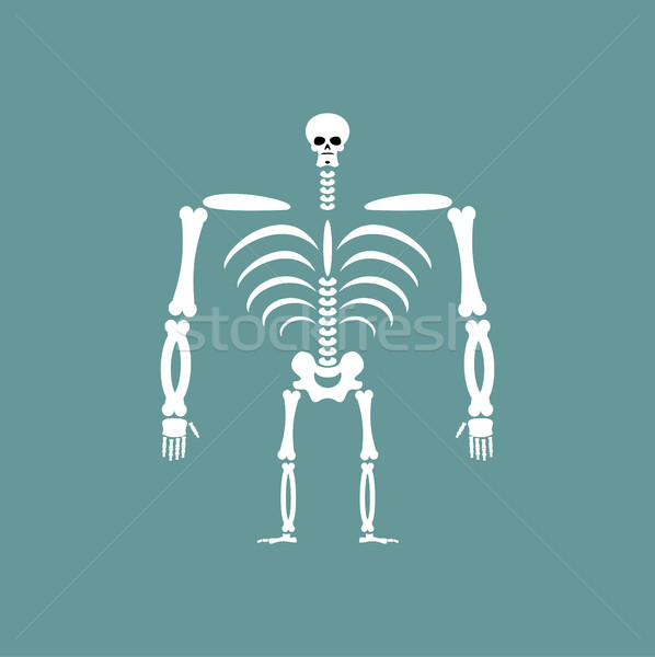 Human skeleton isolated. Skull and Bones. Spine and ribs Stock photo © popaukropa