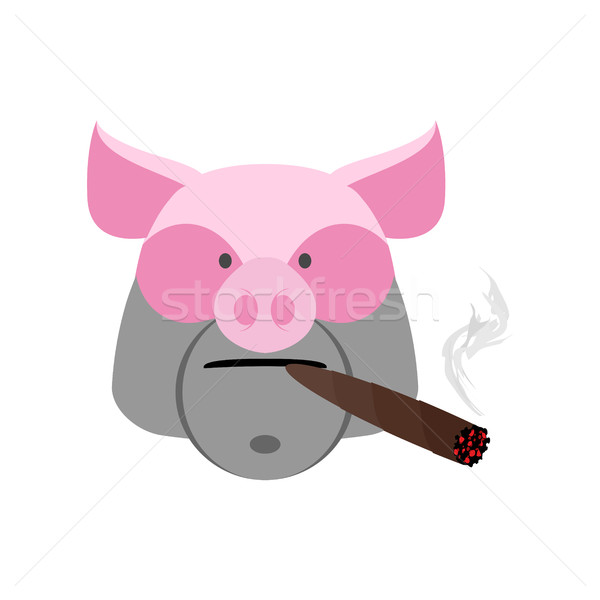 Angry boar with cigar. Aggressive pig isolated Stock photo © popaukropa