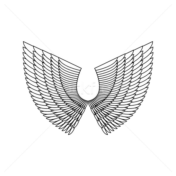 Angel Wings Isolated. White Feather wing of bird Stock photo © popaukropa