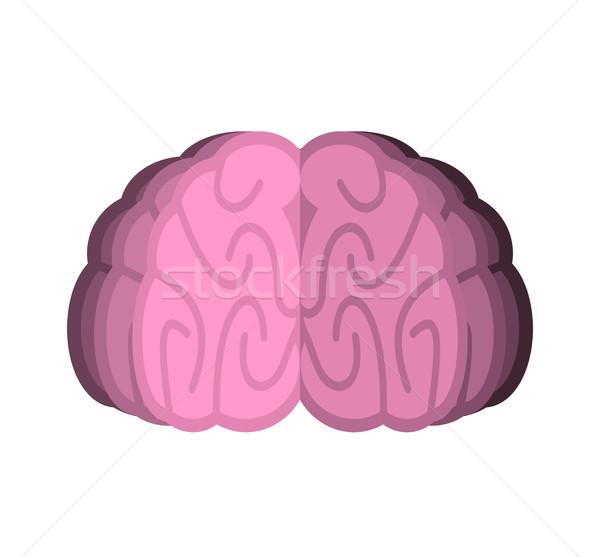 мозг изолированный человека белый тело медицина Сток-фото © popaukropa