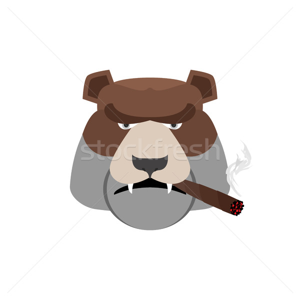 Angry bear with cigar. Aggressive Grizzly isolated Stock photo © popaukropa