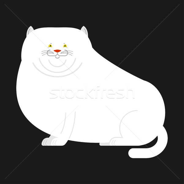 Fat white cat isolated. Big Thick pet home Stock photo © popaukropa