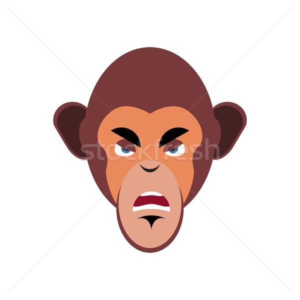 Aap boos agressief emotie geïsoleerd chimpansee Stockfoto © popaukropa