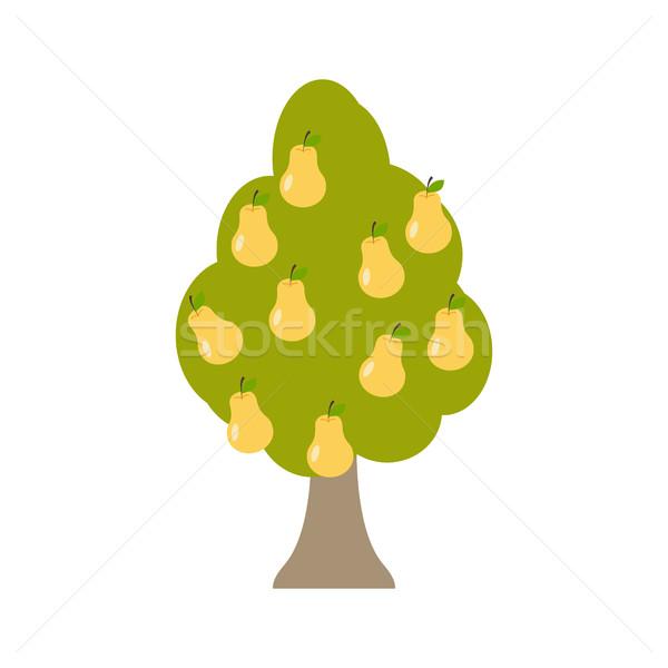 Pear tree isolated. Garden wood with pears on white background.  Stock photo © popaukropa