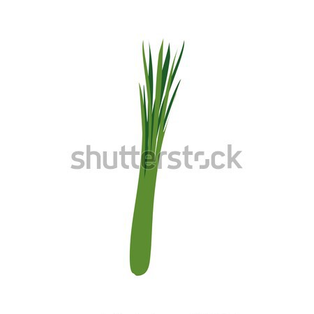 Green onions isolated. leek on white background. Vegetarian food Stock photo © popaukropa