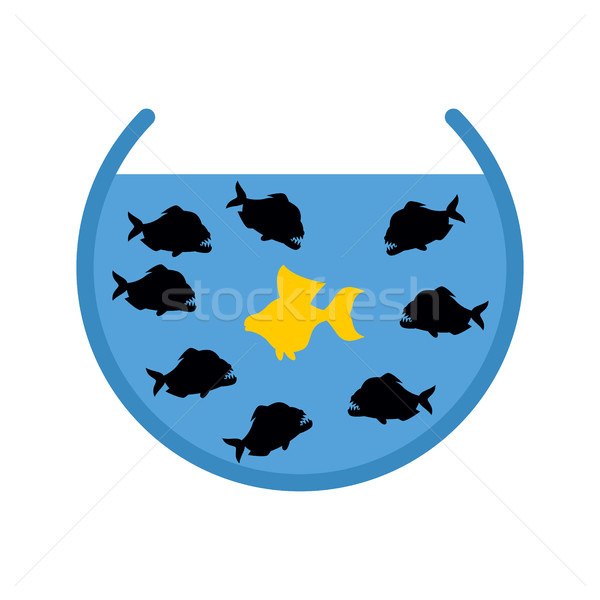 Goldfish and Piranha in Aquarium. Evil Ocean predators surrounde Stock photo © popaukropa