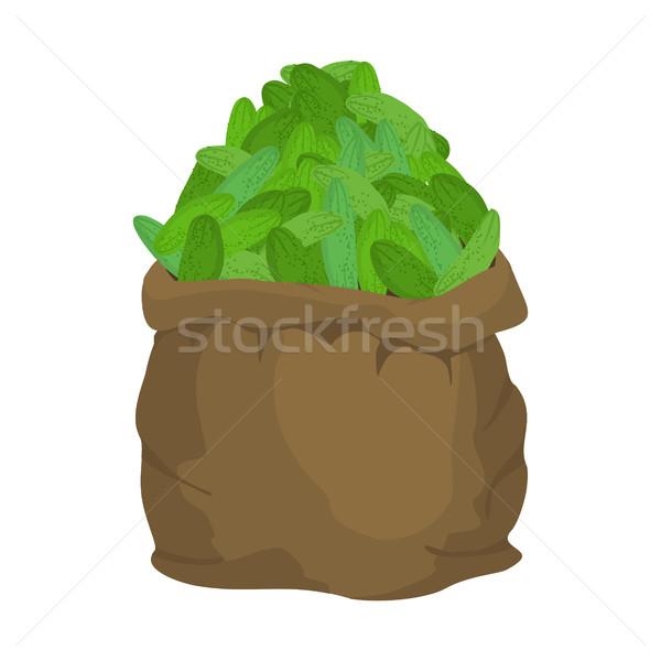 Ogórek konopie worek worek warzyw duży Zdjęcia stock © popaukropa
