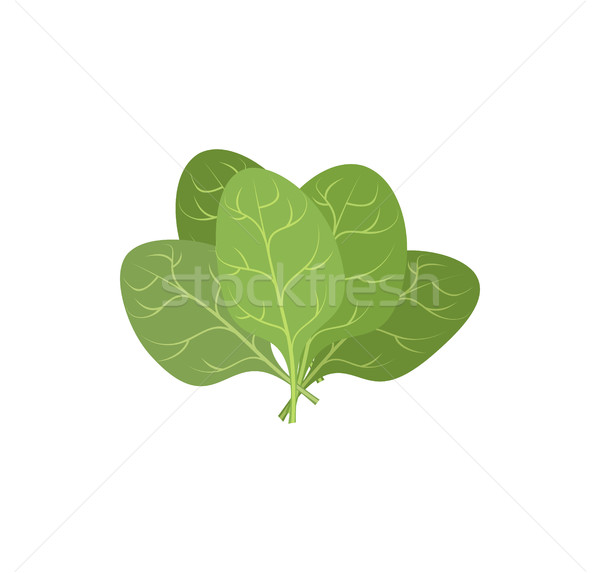Spinach leaves on a white background. A bunch of green plants. V Stock photo © popaukropa