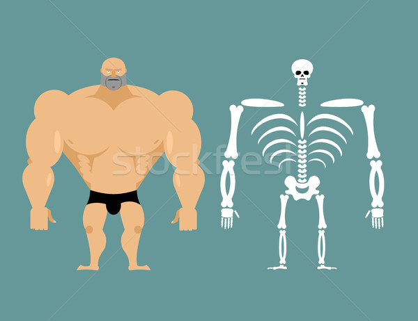 human structure. Skeleton men. construction of athlete. Bones an Stock photo © popaukropa