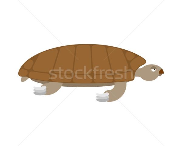 Sea turtle isolated. Sea animal terrapin on white background Stock photo © popaukropa