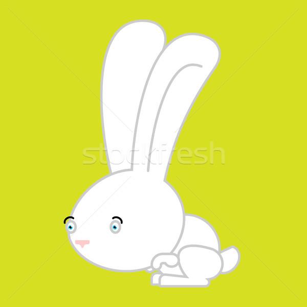 белый кролик изолированный Cute заяц Bunny Сток-фото © popaukropa