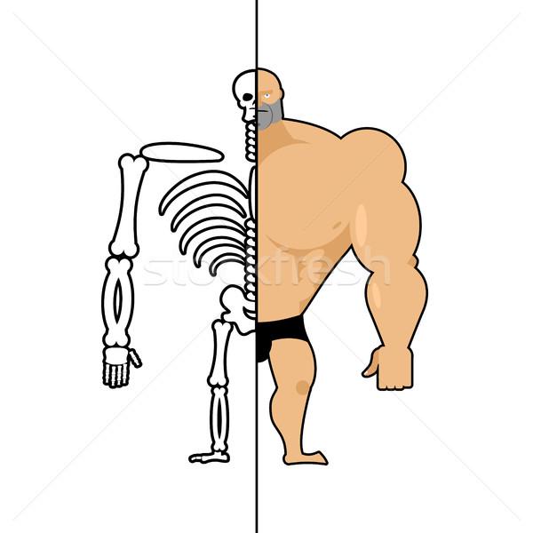 Humanismo estrutura esqueleto homens construção atleta Foto stock © popaukropa