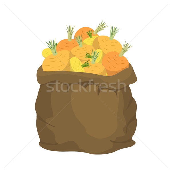 Turnip Burlap bag. sack of vegetables. big crop on farm. sackful Stock photo © popaukropa
