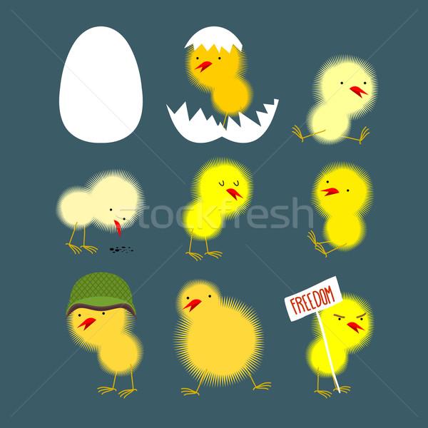 Establecer amarillo pollitos blanco huevo pollo Foto stock © popaukropa