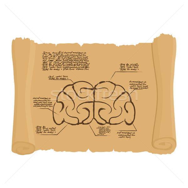 Brain of old scroll Drawing. Old brain Diagram. Archaic human an Stock photo © popaukropa