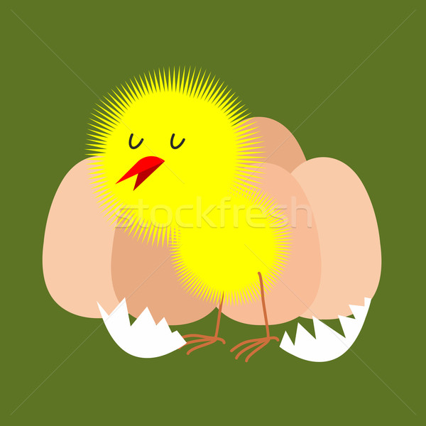 Egg and chicken. Furry chick hatched from an egg. Vector illustr Stock photo © popaukropa