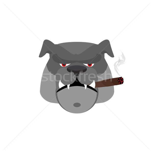 Enojado perro cigarro agresivo bulldog aislado Foto stock © popaukropa