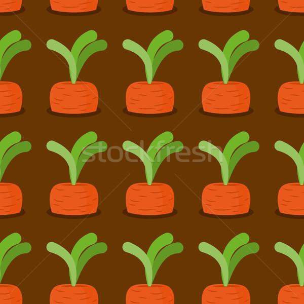 морковь плантация морковь вектора саду Сток-фото © popaukropa
