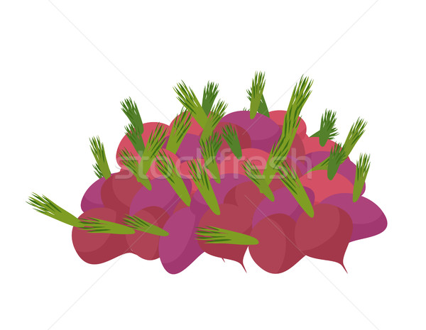 bunch of beets. lot of vegetables. big crop on farm Stock photo © popaukropa