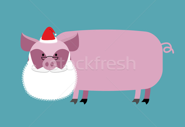Santa Claus Pig. Farm animal with beard and moustache. Christmas Stock photo © popaukropa
