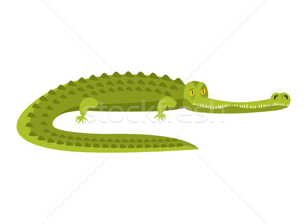 Crocodile isolé alligator reptile prédateur Photo stock © popaukropa