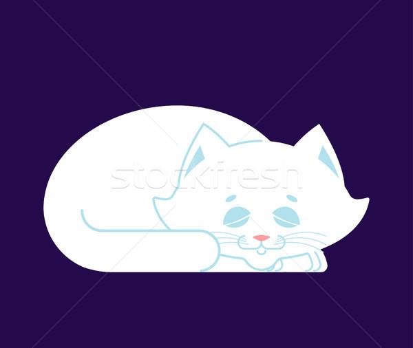 White Cat sleep. cute kitten is sitting. Pet Stock photo © popaukropa