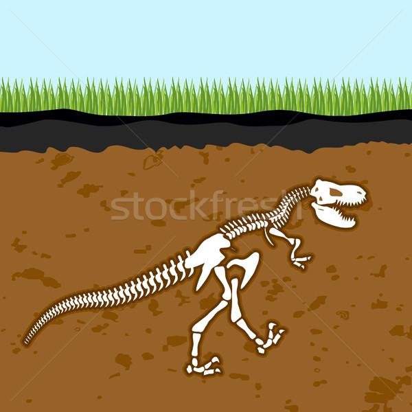 Skelet dinosaurus botten aarde fossiel oude Stockfoto © popaukropa
