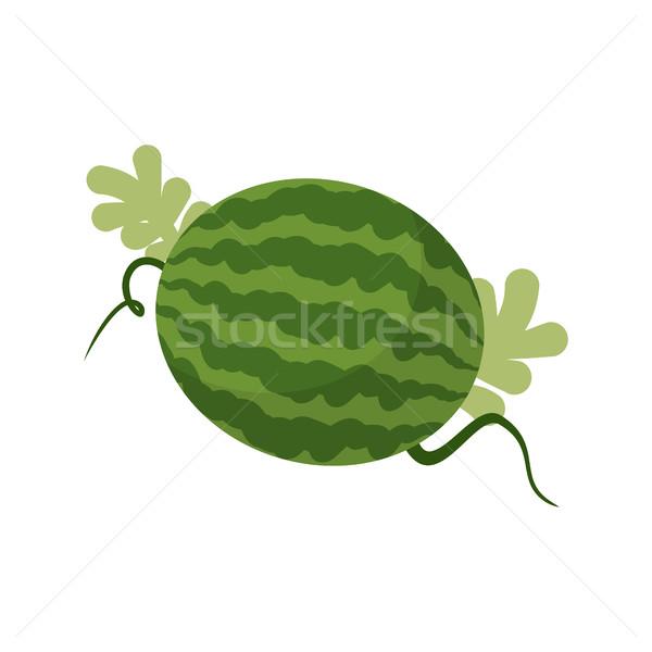 Görögdinnye növekvő izolált gyümölcs levelek étel Stock fotó © popaukropa