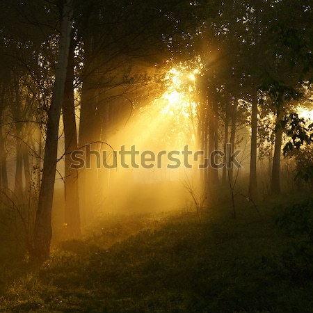Mystical wood Stock photo © Pozn