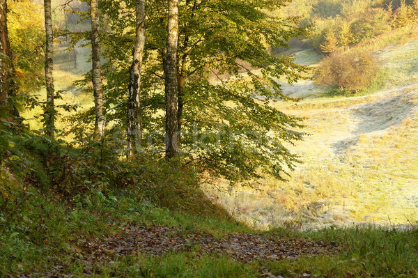 Laat najaar boom bos natuur Stockfoto © Pozn