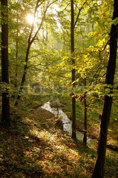 Stream bos najaar bos natuur ontspannen Stockfoto © Pozn