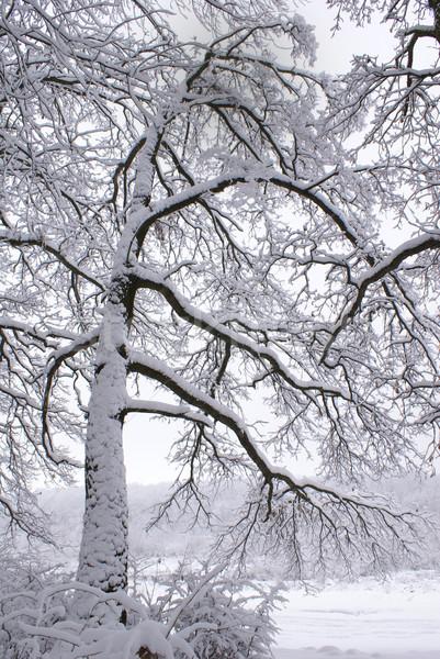 Boom begin winter bos weg hout Stockfoto © Pozn